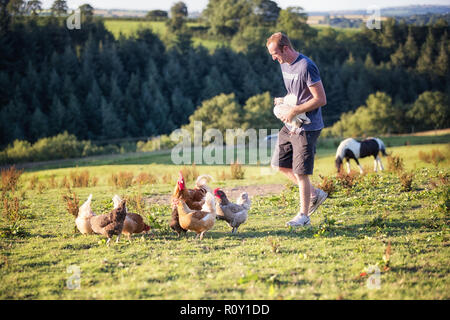 Farmer with happy free range chickens and pet horse in a sunny field of grass in Britain, United Kingdom. A high welfare poultry farm in Wales. - Stock Photo