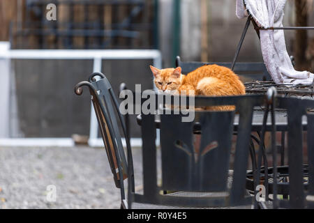 Stray tabby orange ginger cat with sad eyes huddled cold on metal table on street outside on house home patio in New Orleans, Louisiana hungry - Stock Photo