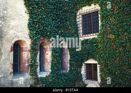 Beautiful castle wall covered with ivy - Stock Photo