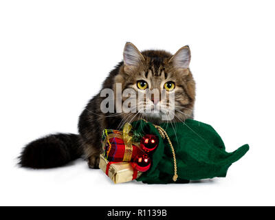 Cute black tabby Siberian cat kitten laying behind a green christmas bag filled with presents and red balls, looking very focussed with bright yellow - Stock Photo