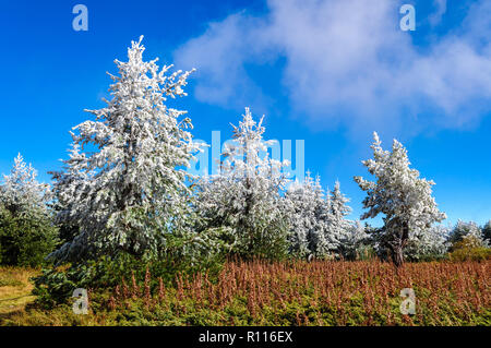 Late autumn first winter frost high in the mountains - amazing landscape under blue skies and mysterious fog - Stock Photo