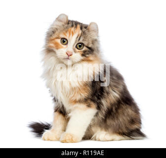 American Curl kitten, 3 months old, sitting and looking at the camera in front of white background - Stock Photo