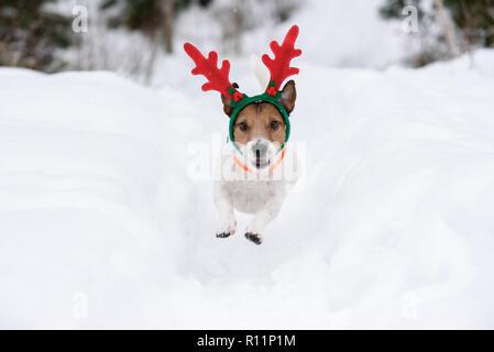 Dog wearing antlers of Christmas reindeer plays in deep snow - Stock Photo