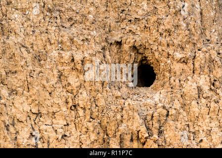 Rock with hole of European roller bird - Stock Photo