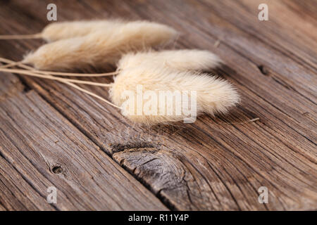 dry decorative grass on rustic table - Stock Photo