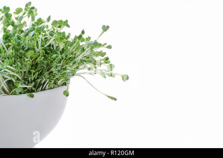 kaiware sprout isolated on white background - Stock Photo