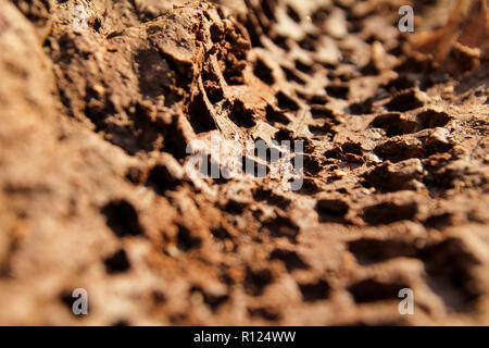 Bike tire tracks on muddy trail royalty. Tire tracks on wet muddy road, abstract background, texture material. Tyre track on dirt sand or mud. - Stock Photo