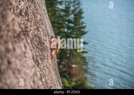 Woman rock climbing, Malamute, Squamish, Canada - Stock Photo