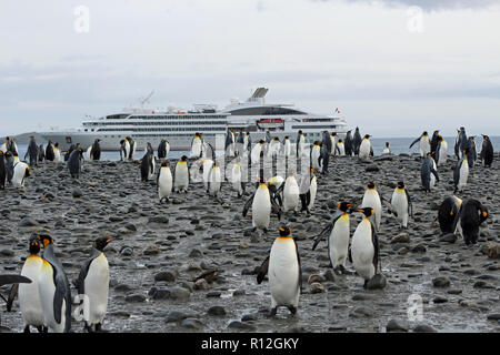 King Penguins with expedition cruise ship in background at St Andrews Bay, South Georgia, one of the world's largest colonies with over 100,000 birds - Stock Photo