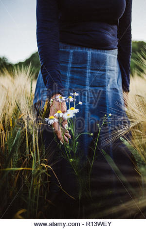 A woman picking daisies in a field - Stock Photo