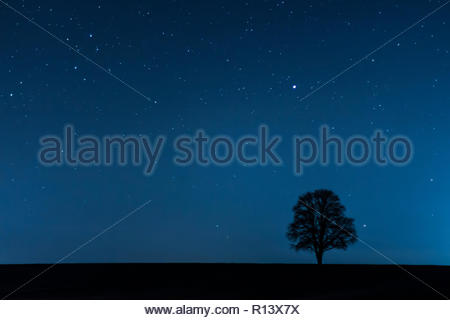 Low angle view of a tree under a starry sky at night - Stock Photo