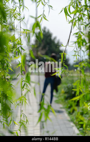Silhouette of woman behind willow tree leaf. Selectif focus and shallow depth of field. Separation, leaving, - Stock Photo