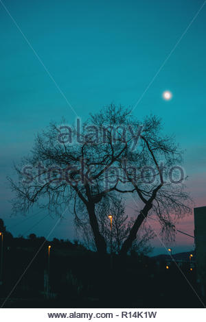 Silhouette of a bare tree under the night sky out in nature - Stock Photo