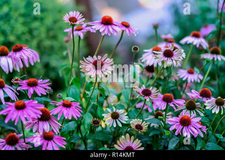 Bright picturesque blooming street flowerbed in purple shades. Beautiful seasonal floral background for different topics - Stock Photo
