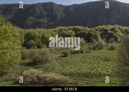 Old unspoilt pasture studded with anthills, in the foothills of the Dinaric Alps, Croatia. - Stock Photo