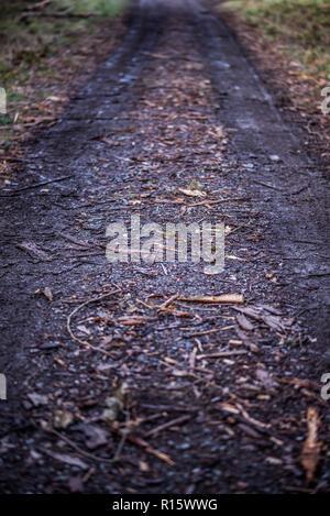 Damaged Woodland Trail, Forestry Industry, Woodland, UK - Stock Photo