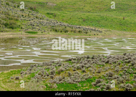 Spotted Lake, near Osoyoos, BC, Canada - Stock Photo
