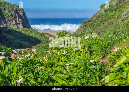 Big Sur, California, USA. View of Calla Lily Valley and the ocean. - Stock Photo