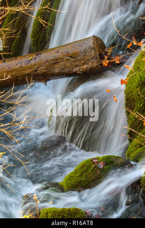 Isolated Trunk on a small waterfall,  Plitvice National Park Croatia
