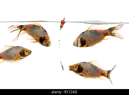 Shubunkin swimming around a Float - Stock Photo
