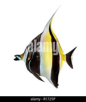 Side view of a Pennant Coralfish, Heniochus acuminatus, isolated on white - Stock Photo