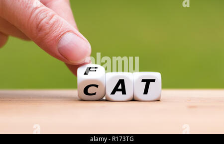 Hand turns a dice and changes the word 'CAT' to 'FAT' - Stock Photo