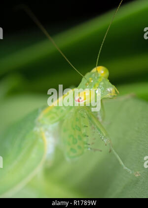 Macro Photography of Eye of Praying Mantis on Green Leaf - Stock Photo