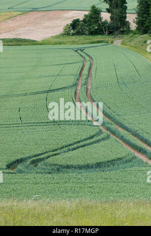 Tramlines and tractor wheel turnings in winter wheat in green earat the end of the season, Berkshire, June - Stock Photo