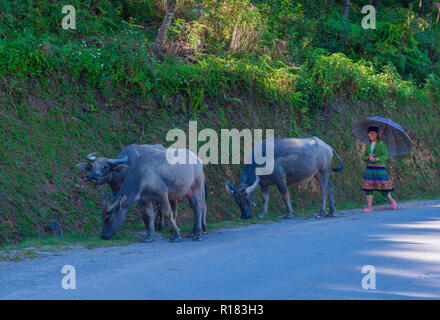 HA GIANG , VIETNAM - SEP 15 : Vietnamese farmer in the countrside near Ha Giang Vietnam on September 15 2018. nearly 80 percent of the population of V - Stock Photo