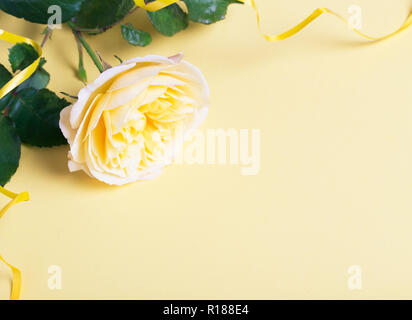 Festive flower English rose composition with ribbon and beautiful bokeh on the yellow background. Overhead top view, flat lay. Copy space. Birthday, M - Stock Photo