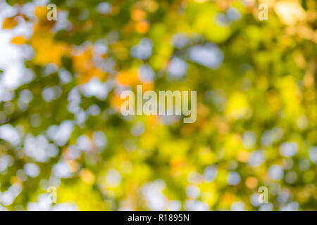 Natural green blur background in sunlight, abstract round bokeh from green leaves, blurred background - Stock Photo