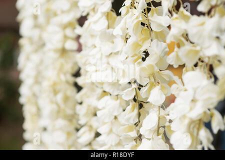 Flower wall as wedding decoration - Stock Photo