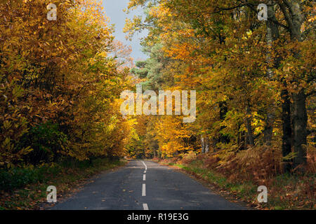 autumnal colours in Crooksbury woods on the road between Elstead & Seale, near Farnham & Godalming, Surrey, England - Stock Photo