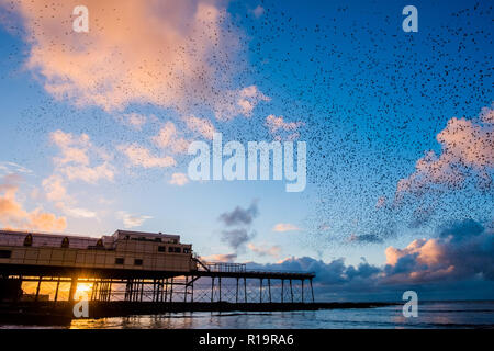 Aberystwyth Wales, UK. 10th Nov, 2018. UK Weather: On a breezy November evening, tens of thousands of starlings fly in murmurations at sunset in the sky above Aberystwyth pier, before swooping down to roost noisily for the night on the forest of cast iron legs underneath the town's Victorian seaside attraction. Aberystwyth is one of the few urban roosts in the country and draws people from all over the UK to witness the spectacular nightly displays. photo Credit: keith morris/Alamy Live News - Stock Photo