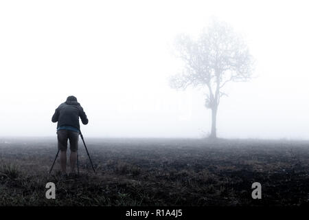 photographer taking photo of lone tree in thick morning fog. photographing tree in Thailand national park. low visibility due to water mist. - Stock Photo