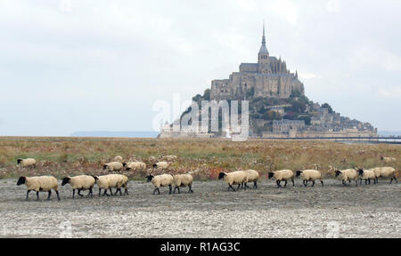 Beautiful scenic view of famous historic Le Mont Saint-Michel tidal island with sheep grazing on fields in the morning, an UNESCO world heritage site,