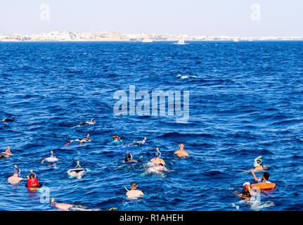 snorkeling trip in the red sea, snorkeling with dolphins - Stock Photo