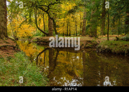 Blackwater Rhinefield Ornamental Drive The New Forest Hampshire England UK - Stock Photo