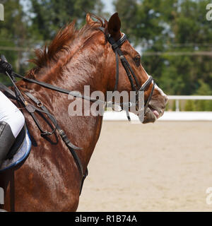 Head of galloping the sorrel horse close-up - Stock Photo