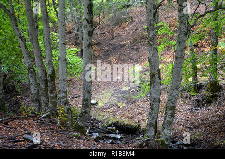 Tejera Negra beech and oak forests in the Sierra de Ayllón, Guadalajara, central Spain - Stock Photo