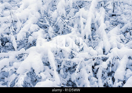 Snow covered tree branches in winter. Natural texture and background, copy space - Stock Photo