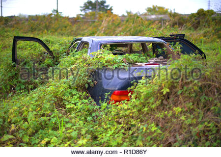 Abandoned overgrown car in field. - Stock Photo