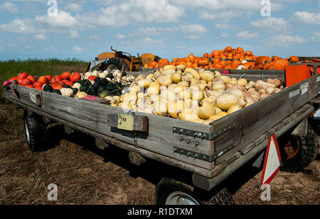 Honor System Market:  Tractor-drawn carts with contribution cash boxes create a roadside farmer's market for pumpkins and squash in southern Wisconsin - Stock Photo