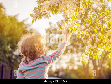 Selective focus on young blonde curly hair girl reaching out to a beautiful apple tree blossoms in spring outdoors, hope concept. Golden hour light.