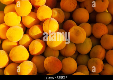 Heap of apricots light by sun in the bucket - Stock Photo