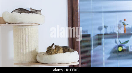 View of two cats sleeping on teh scratching post - Stock Photo