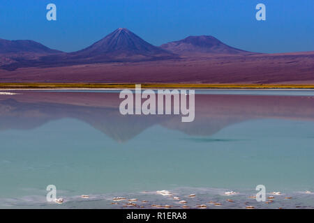 Amazing salt lakes volcanoes reflections inside the dry Atacama Desert at Chile in middle of the Andes with an amazing view over Licancabur Volcano - Stock Photo