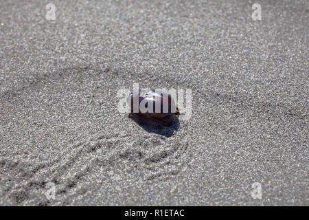 Exploring a local beach on a beautiful Spring morning. A variety of animal tracks record various events, encounters, meetings. - Stock Photo
