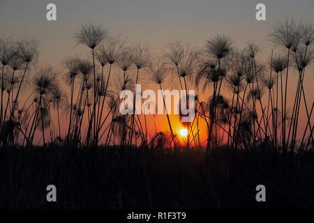 Okavango delta - Stock Photo