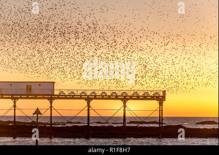A murmuration of Starlings on the West Coast of Wales in a small seaside town of Aberystwyth, Ceredigion. This is a general sight every year as this i - Stock Photo